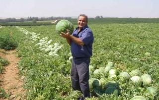 water-melon-meir